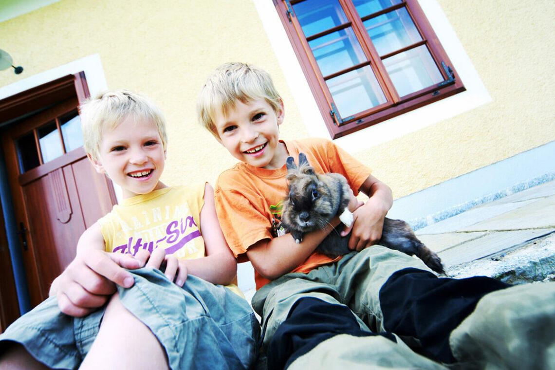 Branche: Haustiere & Tierbedarf
